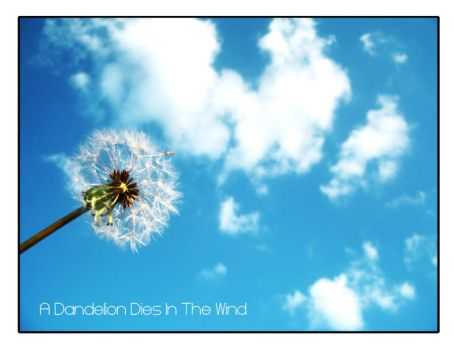 A Dandelion Dies In The Wind by lil-crizzy