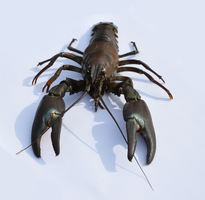 Crayfish from the front by karlvandal-stock