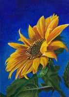 Sunflower - acrylics painting by Giselle-M