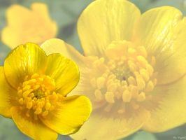 Flowers Edition: Butterflower by Marichromatic