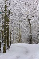 Premade background: Snow by amygdaladesign