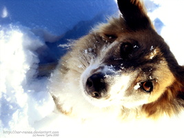 Snowy dog2 by nor-renee
