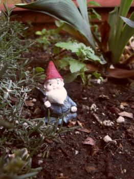 NV-Stock_Bobby Gnome by NV-Stock