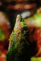 Mountain of Moss 1 by nazzara