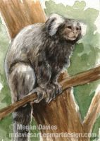 Marmoset ACEO by Pannya