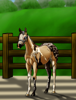 Nessie at 2015 WBS Quality In Color Show by angry-horse-for-life