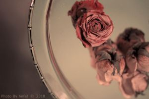 Wilting by ANFAL-0