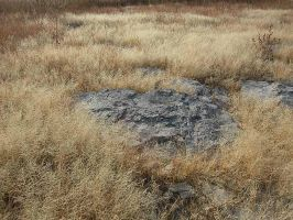 Dried grass and large rock by 16stepper