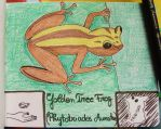 Golden Tree Frog - Animal of May 2015 by MoonyMina