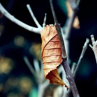 .Contrast of autumn - 3 by tgphotographer