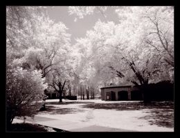white trees of spring by insaneone