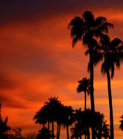 sunset palms by eocjtlels