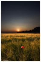 Field in the sunset by matze-end
