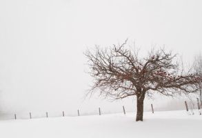 Cold Appletree by TheTruthSeeker