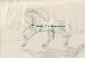 stallion of the plains by Sabine-E