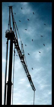 'Crane' by LiveFreeDieFree