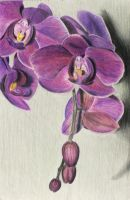Orchids by shara06yumul