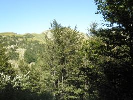 green mountains and green trees by Cippman