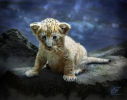 Wee Lion by Kerri--Jo