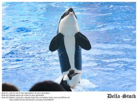 Sea World: Shamu Jump.4 by Della-Stock