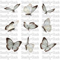 Butterfly Stock 21 by Shoofly-Stock