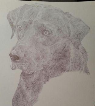 WIP - Ballpoint Doggy update by ShanePMcD