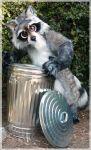 Raccoon in the trash by LilleahWest