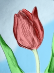 Colored Tulip by RinoaWings