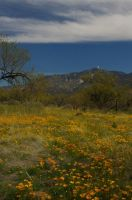 Kitt Peak with Poppies by PatGoltz