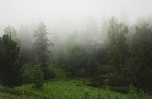 Forest in the fog by Korolevatumana