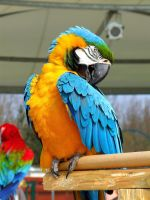 Macaw by EarthBirds