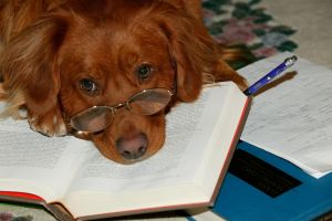 Dog Gone Homework by Easterncurrents