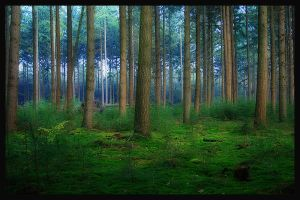 Glowing forrest by simoner