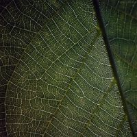 leaf by FeenoGraphie