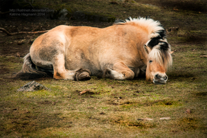 Sleepy head by KatrineH