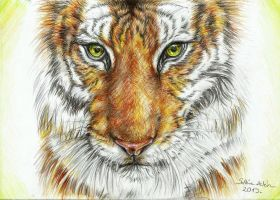Tiger by Wolf160
