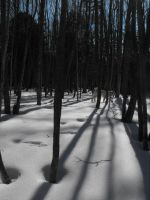 Trees and shadows by Emzoid