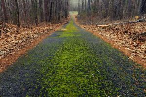 Follow the Mossy Trail by Shily666