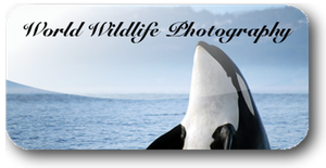 World Wildlife Photo Icon by michaelgoldthriteart
