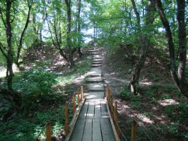 Stairs in the mountain forest by Eriseite