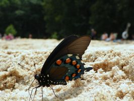 Geraldo the Butterfly 2 by iJustRodeYourBicycle