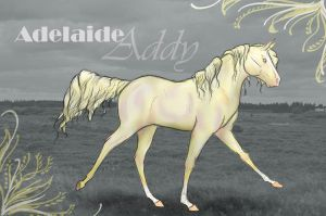 Adelaide Ref by Follyfoot