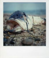 ichthyology by guost