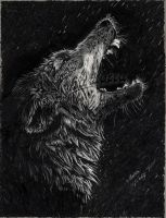 """Drawing:   """"Alpha's Cry"""" by AiSolare"""