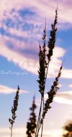Grasses one by ElinsPhotography