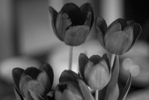 Easter Flowers I by dharris001