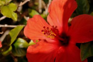 Flowers of Egypt by HaeMa