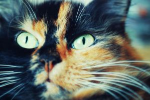 Cat's eyes by theRomancee
