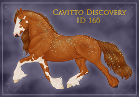 Cavitto Group Discovery 160 by BrindleTail
