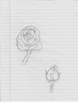 My rose sketches by NomNomKat2